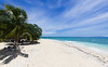 South Sea Island    Fiji (David Marriott - Sydney) Tags: denarauisland westerndivision fiji fj coral south island palm