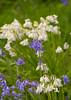 Churchyard Nature (Adam Swaine) Tags: flora flowers wildflowers bluebells churchyard kent england english britain british springinkent ukcounties uk beautiful canon counties countryside nature petals