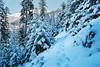 Un Noël dans les Alpes (Hëllø i'm Wild) Tags: analog film 35mm canonae1 kodakportra400 winter snow alps mountains cold nature forest tree hike