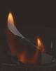 Macro Monday (Gaviotita) Tags: macromondays flame flama macro nikon105mm january2018 nikon nikond3200