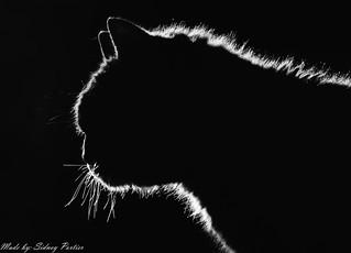 My Cat! Bink! Silhouet