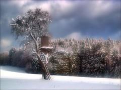 Baumhaus (almresi1) Tags: hochsitz jägerstand tree baum wald wood forest winter schnee snow welzheim ebnisee sky himmel wolken clouds sun sonnenschein nature landscape