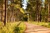 TARDE DE CAMINATA (su-sa-ni-ta) Tags: paseo nature naturaleza caminata pinos paisaje cordoba flickr hoy today enero vacaciones