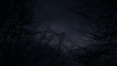 still there (anjamation) Tags: january 2018 tree clouds dusk nightfall sonya7ii unaltered sonyfe24240mmf3563oss 169 moonlight branches trees alley lookingup baum arbre crépuscule dämmerung