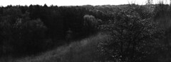 The Big Hill in Schneider's Woods (pmvarsa) Tags: fall autumn 2017 analog film 35mm 135 ferrania ferraniap30alpha p30 panchromatic classic camera nikonsupercoolscan9000ed nikon coolscan outside cans2s outdoors contrast landscape hill trees grasses panorama bw blackandwhite waterloo ontario canada moraine mamiya rb67 pros mamiyarb67 mamiyarb67pros mediumforamt mf