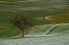Lady in Red, running (Lutz Koch) Tags: lonetree jogging running sports laufen red rot landschaft landscape acker field schnee snow winter idsteinerland idstein dasbach taunus elkaypics lutzkoch