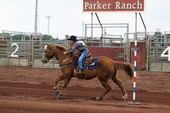 unbridled enthusiasm (BarryFackler) Tags: rodeo keikirodeo parkerranch kamuela paniolo contest sport arena cowboy boy male youngman horse rider equine animal domesticanimal ranch ranching western horseman kohala 2018 outdoor action riding horsebackriding equestrian rodeoarena waimea kamuelahi racing running cowboyhat signs saddle reins bridle saddleblanket spurs bluejeans kid child youth waimeahi hawaiianculture hawaiianhistory hawaiiantradition panioloculture boots hooves stirrups withers mane cowboyboots northhawaii barryfackler barronfackler bigisland hawaii hawaiiisland hawaiicounty hawaiianislands island sandwichislands polynesia tropical