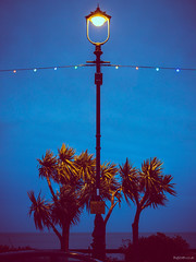 Wild Palms (Roj) Tags: canon5dmkiv promenade lowlight christmas sea lights canonef70200mmf28isiiusm bluehour afterdark christmaslights originalphotographers sourcerojsmithtumblrcom palmtrees llandudno northshore photographersontumblr seaside gogleddcymru northwales uk