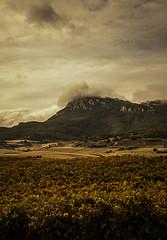 Tiempo de vendimia (Ibarnavarro) Tags: vendimia vino wine rioja otoño uva sierra monte