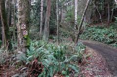 2018-01-18 Whistle Lake Trail 20 (05) (1024x680) (-jon) Tags: anacortes skagitcounty skagit fidalgoisland sanjuanislands washingtonstate washington pnw pacificnorthwest salishsea pugetsound acfl anacortescommunityforestlands winter tree woods forest road whistlelake trail gerrywallrath canon canonpowershotsd1300is a266122photographyproduction sign fern moss alder douglasfir hiking hike walk walking