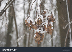 Cold Winter (797071909) (antonmarkin) Tags: winter leaves snow frozen leaf tree background roof closeup frost feet nature cold autumn white plant season pine branch ice beautiful abstract fall blue frosty isolated autumnleaves forest weather outdoor wood seasonal beauty crystal landscape park canon 6d 70200mm f4 mood