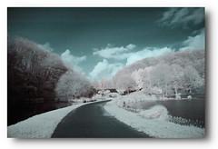 vallon stang alar ( infrarouge ) (lp_alain) Tags: infrarouge infrared finistère forêt nikon ngc nature nikkor d70 bretagne brest brittany bzh stangalar
