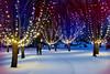 Along the Skating Trail (Garry9600) Tags: lumix fz200 winnipeg manitoba canada theforks outdoor cans2s winter skatingtrail skaters skating lights night trees snow