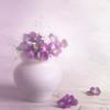 A sign of spring. (BirgittaSjostedt) Tags: flower pot still soft light beauty spring card flowercard texture