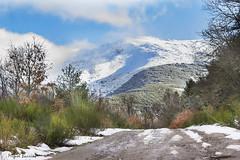 camino de la sierra-0514 (mibagui22) Tags: nieve sierra