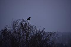 Si t'étais là (Jam Faz) Tags: brussels bruxelas bj bruselles te morning day bird fog nevoeiro louane si t'étais là naturea cidade nature city early