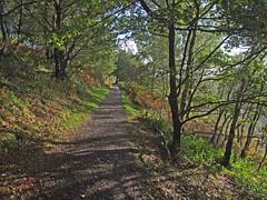 Autumn in Teign Gorge, from Hunter's Path passing through copse (Philip_Goddard) Tags: europe unitedkingdom britain british britishisles greatbritain uk england southwestengland devon dartmoornationalpark drewsteignton teignvalley teigngorge hunterspath views scenery landscapes valley hill woodland wood autumn