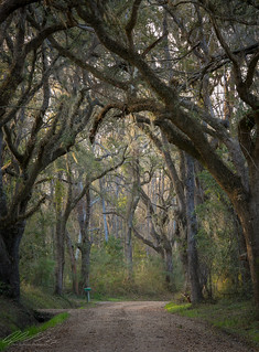 Edisto South Carolina Country Road
