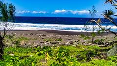 Hawaii-WaipioValley-67.jpg (Chris Finch Photography) Tags: jungle hawaiiphotography waipio taro waipiovalley hawaii landscapephotographs landscapephotography photographs chrisfinch wwwchrisfinchphotographycom chrisfinchphotography utahphotographer tarofarms bigisland tarofarm tropical valley