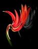Blossom, flower (lucianomandolina) Tags: wirbel spirale whirl swirl farbig colorful rot gelb grün blossom flower
