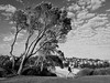 Coogee-15 (Mariasme) Tags: monochrome blackandwhite walking tree woman coogee