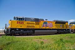National Train Day - Train #5 (tim_1522) Tags: railroad railfanning rail illinois il unionpacific up chester sub subdivision nationaltrainday2014 emd sd70ah