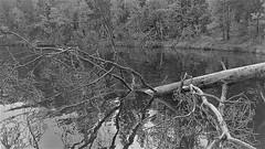WP_20150619_12_28_15_Pro (www.ilkkajukarainen.fi) Tags: suomifinnland eu europa suomi100 lake järvi vesi water blackandwhote monochrome mustavalkoinen uusimaa juhannus kesä scandinavia
