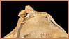 """C'mon! Gimme a kiss!"" (Johann (Sasolburg, RSA.)) Tags: kiss makemesmile lizard reptile reptiel ef70300mmf456isusm canoneos60d coth alittlebeauty specanimal coth5"