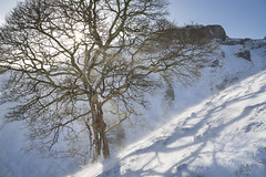 Sycamore at Winnats Pass (Keartona) Tags: winnatspass slope steep sycamore tree winter snowy windy sunshine sunlight sunny morning derbyshire peakdistrict bare shadows whitepeak landscape