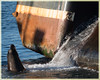 where are the stairs... (marneejill) Tags: sea lion fish boat french creek bc parksville
