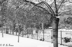 Le jardin des plantes sous la neige 03 (letexierpatrick) Tags: jardindesplantes paris france europe extérieur explore jardin nature noir blanc noirblanc black white bw blackandwhite neige nikon nikond7000 ville arbres