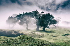 Dancing on the Hill (*Capture the Moment*) Tags: 2017 fog insel island laurel lorbeer madeira mist nebel pauldaserralowlands sonye18200mmoss sonynex7 wetter wolkenclouds foggy