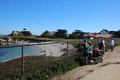 IMG_7541 (mudsharkalex) Tags: california pacificgrove pacificgroveca