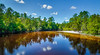 Calm Reflections (Stuart Schaefer Photography) Tags: trees landscape river miltonflorida calmwater blackwaterriverstatepark outdoors outdoor florida calmriver reflections clouds milton unitedstates us water sky tree park forest