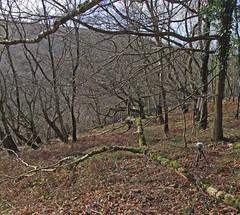 Recording wind chimes in woods above Fingle Bridge (Philip_Goddard) Tags: europe unitedkingdom britain british britishisles greatbritain uk england southwestengland devon dartmoornationalpark drewsteignton teignvalley teigngorge drewstonwoods recording windchimes sonypcmm10