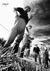 Rice's farmer (EddyB) Tags: deltadelebre nikon d300s sigma1020f456 eddyb retrato portrait bw blancoynegro blackwhite