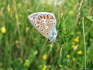 Butterfly 1603