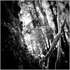 Forest Bokeh (JulieK (thanks for 6 million views)) Tags: web bokeh bw monochrome iphonese squareformat tinternwoods wexford ireland irish hmbt