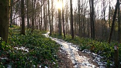 The Snowy Track (Daphne-8) Tags: schnee neve nieve neige snow sneeuw bomen trees bäume arbres arboles bosque wald forest woods woud bos forêt winter hiver inverno invierno nature naturaleza landscape paysage landschaft peasaggio paisaje landschap trail track wanderweg wandeling pad tree wood sun sonne soleil sole sol zon