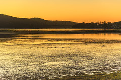 Dawn Waterscape with Ducks (Merrillie) Tags: daybreak woywoy landscape nature australia foreshore newsouthwales earlymorning nsw brisbanewater morning dawn coastal water sky waterscape sunrise centralcoast bay outdoors