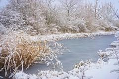 Sunday morning (JossieK) Tags: pond winter reeds snow ice nature
