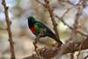 ETH2018-0829jc (ianh3000) Tags: ethiopia 2018 bird lake langano sunbird