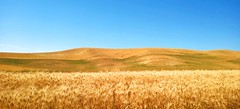 LOOKING OUT AT THE ROAD RUSHING UNDER MY WHEELS.  LOOKING BACK AT THE YEARS GONE BY LIKE SO MANY SUMMER FIELDS. (Irene2727) Tags: summer fields hills nature landscape panorama scape pano palouse washington