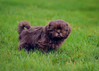 Dog-201 (EB_Creation) Tags: dog shihtzucentral shihtzu puppy nikon nikond7100 d7100 digital