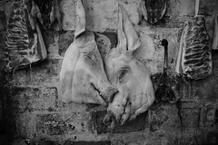Old town residents: pig head (sailwings) Tags: blackandwhite streetphotography street china