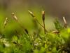 2018-01-13 13-34-15 (C) (turbok) Tags: moose pflanze pilze wildpflanzen