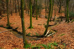 A favourite location... (Puckpics) Tags: roosthole stleonardsforest theford roostholeford sussex england westsussex horsham favourite