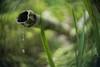 _DSC8538a (kymarto) Tags: bokeh bokehlicious bokehphotography dof depthoffield nature naturephotography beauty beautiful sony sonyphotography sonya7r2 oldlens vintagelens elgeetcinenavitar garden japanesegarden fountain bamboo