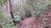 Red River Gorge - Rock Bridge Trail - Wolfe County, Kentucky, USA - April 1, 2017-1-mod (mango verde) Tags: rockbridgetrail redrivergorge wolfecounty kentucky usa