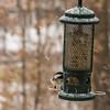 Snacks in the snow (Walt Polley) Tags: 24120mmf4gednnikkor copyright©2018waltpolley minnesota nikond500